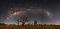 Boabs under the Milky Way