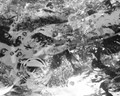 Goldfish pond - monochrome abstract
