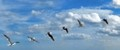 Six shots of one gull stitched into a panorama.