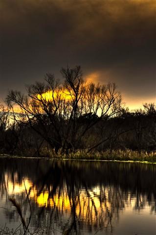 Sunset behind tree2