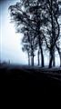TreesintheGlowHDRBW-2