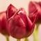 Fading Flowers: