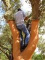 Under a Cork Tree