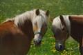 horse1-RHGx1