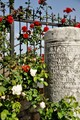 fences, roses and the ancient column