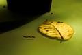 Infrared Leaf