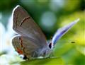 Godly Butterfly