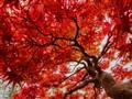 Look like autumn leaves