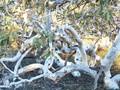 Torturous Tangle of tree trunks
