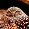 owl_1_FB