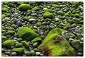 Mossy pebbles