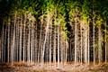 Challenge Forest