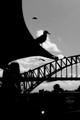 Taken from the Opera Bar, Sydney Opera House