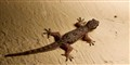 Spider Versus Gecko