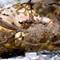 herring_eggs_stacked: OLYMPUS DIGITAL CAMERA
