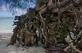 Rarotonga Roots