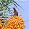 Raami Bird_01