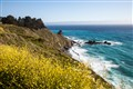 Yellow Wildflowers on the Big Sur Coastline