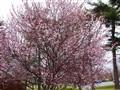Wet Spring