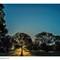 SunshineTrees_NDF_8923-Edit