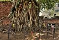 Ayuttaya Roots, Lord Buddha Face