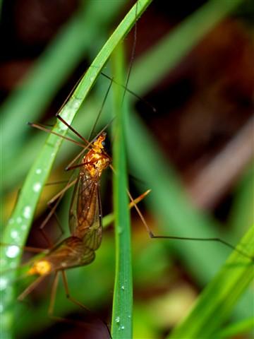 bug_3-23-13_small