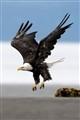 EagleTakeoff