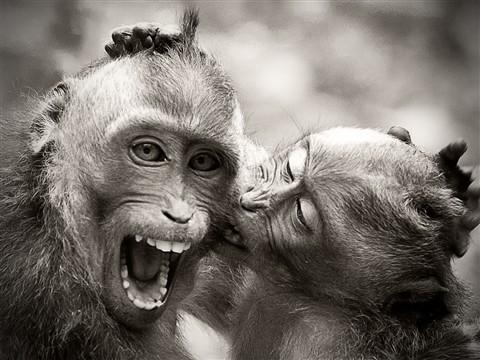 Monkey4 B&W