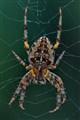 Hi ISO Spider