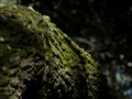 Bark & Moss