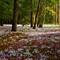 Cyclamen Forest Floor