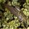 Hummingbirds 12062011_0006_crop