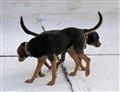 2 heads, 8 legs, 2 tails: OK Duality!