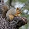 Squirrel 0468