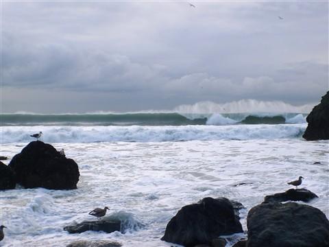 mussel rock6