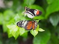 Mating flight