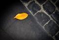 A leaf in Rome