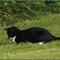 El Gato Harry 1