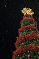 Chrismas Tree And Snow