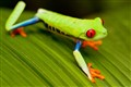 frog_7710