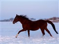 Snow is a good thing for a horse.He likes it!