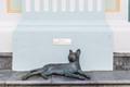 The ACM Cat