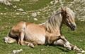 A Horse, Reclining