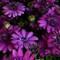 3-9-12 flowers 4