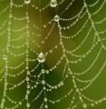 Web Diamonds