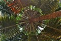 Coco-Circle....looking up a coconut tree.
