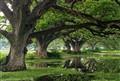 Submerged trees, Tissa Wewa