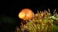 Mushroom Eclipse
