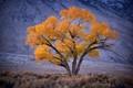 Tree at dusk, California