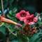 Flower_DSC2143